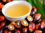 भारतीय तेल कारोबारियों ने रोका मलेशिया से पाम ऑयल के आयात को