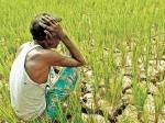 पीएम किसान : 7 करोड़ अभी भी योजना से बाहर, जानें कैसे लें पैसा