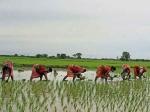 किसानों के लिए बड़ी राहत, 'जीरो' फीसदी ब्याज पर मिलेगा लोन