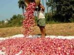 प्याज : देश में मच रहा हाहाकार, मगर फिर से निर्यात की तैयारी