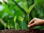 पेड़ गिरवी रख कर मिलता है बिना ब्याज का Loan, जानिए कहां