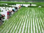 Budget 2021 : किसानों को सरकार दे सकती है तोहफा, आय दोगुनी करने का लक्ष्य