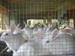 Business Idea : खरगोशों से है प्यार तो शुरू करें ये कारोबार, हर साल कमाएंगे 8 लाख रु