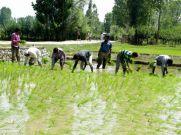 Budget 2019 : किसानों को मिल सकता ज्यादा कर्ज
