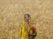 किसानों को तोहफा : पीएम किसान के लिए खुद करें रजिस्ट्रेशन