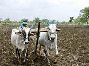 किसानों को कम दाम में मिलेगी खाद, आईएफएफसीओ ने घटाई कीमत