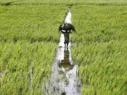 किसान क्रेडिट कार्ड : क्या हैं फायदे, जानिए लेने का तरीका