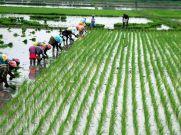 Budget 2021 : किसानों को सरकार दे सकती है तोहफा
