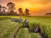 Budget 2021 : क्या किसानों को मिलेगी बड़ी सौगात