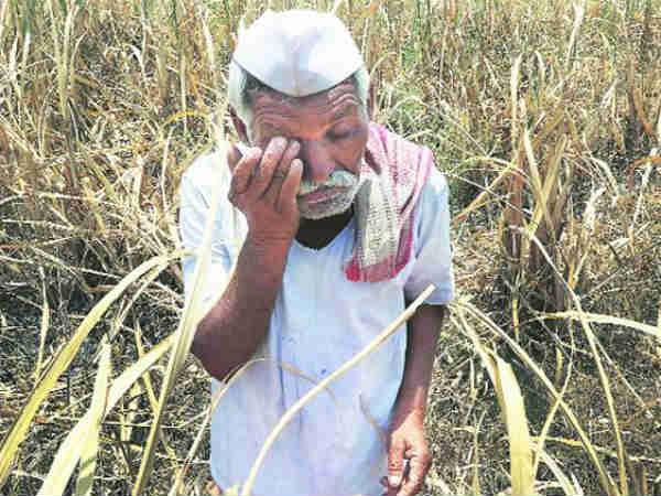 अब गेहूं किसानों के रोने की बारी, देखें क्या करती है सरकार