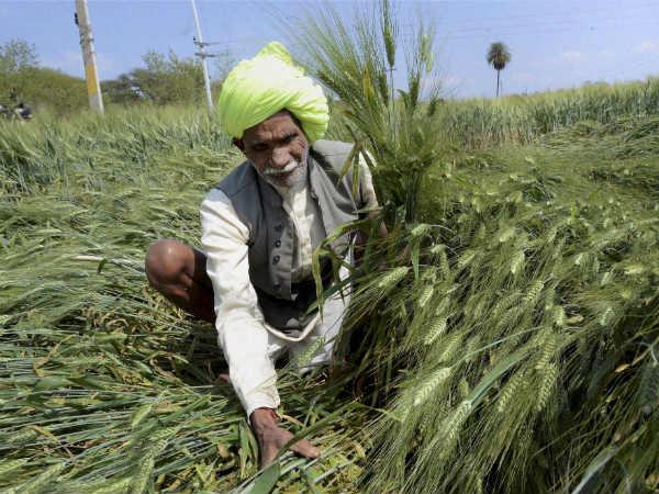 किसानों के लिए खुशखबरी: गेहूं और दालों के समर्थन मूल्य में बंपर वृद्धि