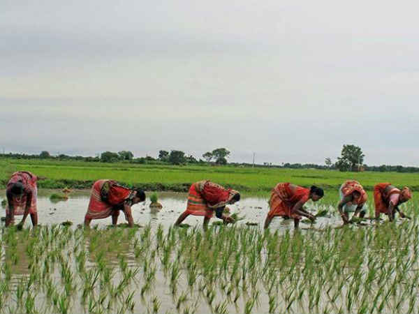 पंतप्रधान किसान योजनेसाठी अर्ज कसा करावा