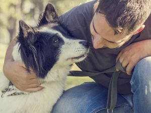 What Is Pet Insurance Which Companies India Offers It