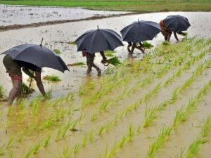 Imd Forecast Possibility Of Normal Monsoon Rate Of Agri Commodity Drop