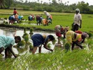 Narendra Modi Government Can Give 15 Thousand Crore Rupees To Farmers
