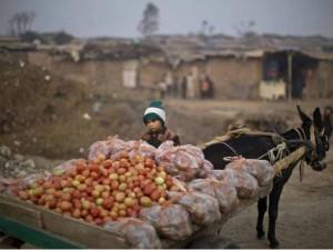 Tomato Price In Pakistan Crosses Rs 300 Per Kg