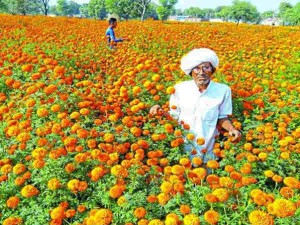 Business Idea How To Earn From The Cultivation Of Marigold And Rose