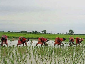 Agricultural Exports India Upholds Gets Rs 25500 Crore In 4 Months