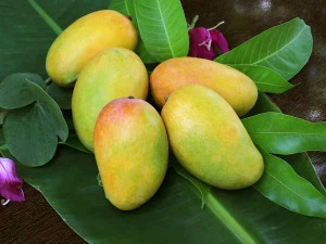Indian Mangoes Rocked The World Better Varieties Produced Than Pakistan