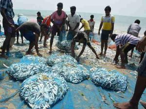 Fisheries Pm Modi Launched Pradhan Mantri Matsya Sampada Yojana Of Rs 20050 Crore