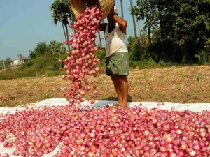 Outcry For Onion In The Country Its But Rotting At Ports