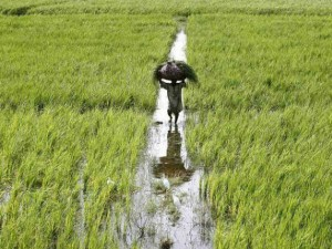 Farm Exports Register 9 Point 8 Percent Growth In