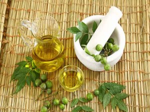 Business Idea Make Indigenous Insecticide From Neem At Home You Will Earn A Lot